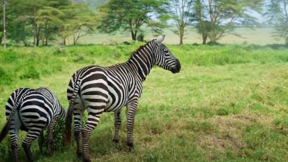 Kenya | The Experience